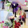 توليب TULIP
